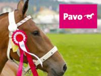 Piensos caballos PAVO