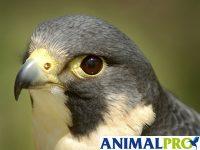 Suplementos Rapaces AnimalPro