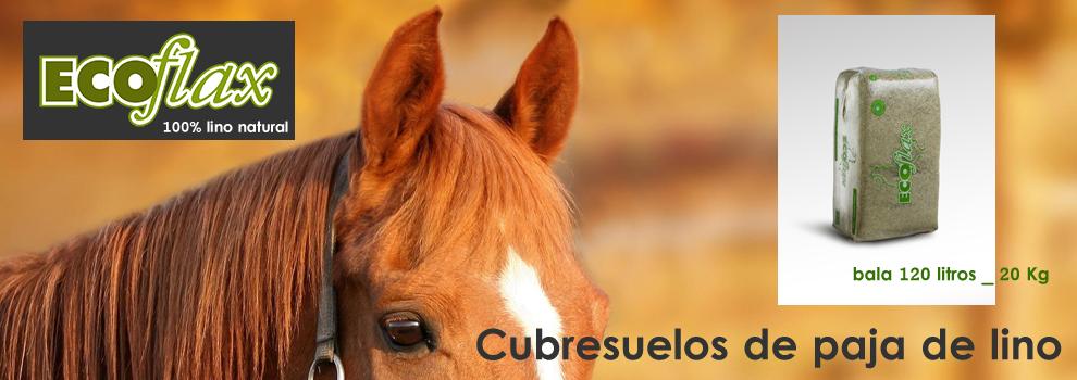 Slider-ECOflash-caballos_990x350